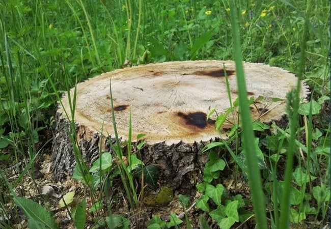 How to Kill Tree Stumps - Tree Stump