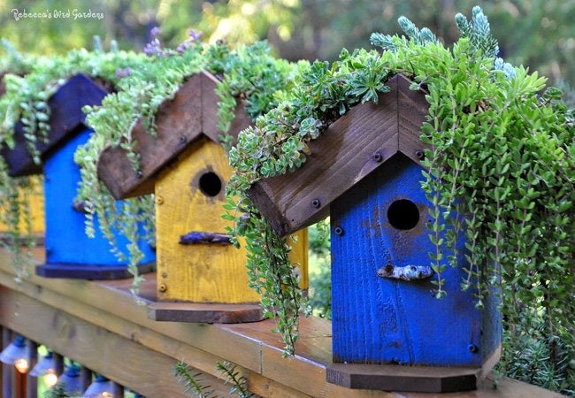 DIY Birdhouse - Roof Garden