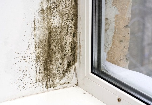 Prevent Mold with HVAC