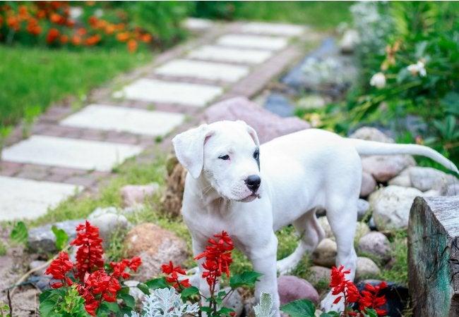 Puppy Proofing - Dog-Friendly Backyard