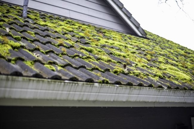 Best Seattle Wa Roof Moss Removal