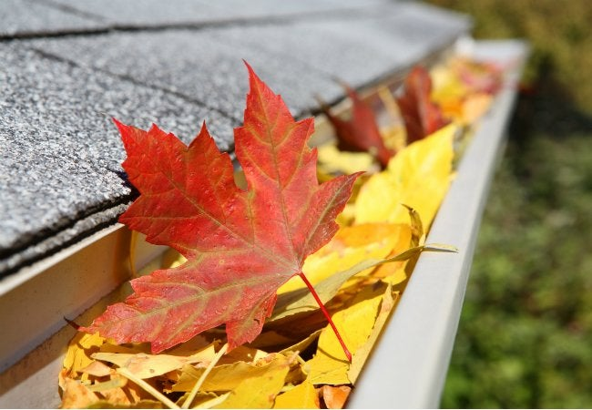 How to Clean Gutters without a Ladder - Leaves in Rain Gutter