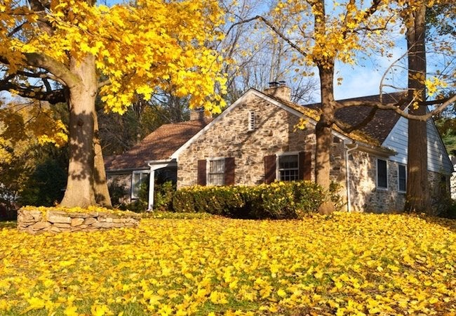 Fall Pest Prevention - Autumn House