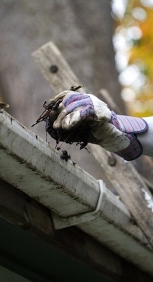 Fall Pest Prevention - Cleaning Out Gutters