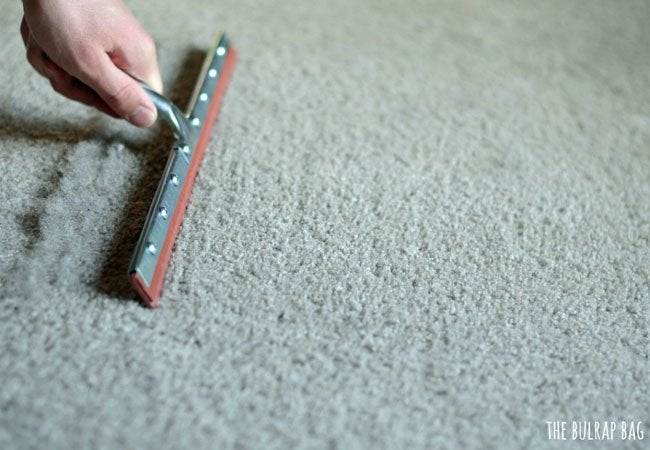 Pet Hair Removal - Carpet