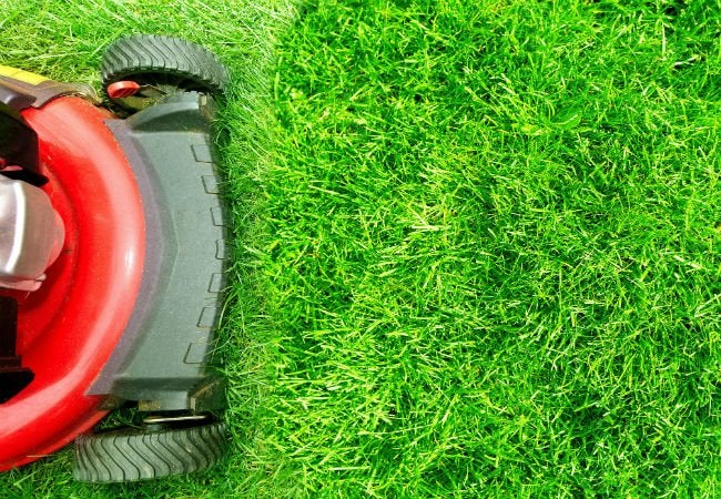When to Fertilize Lawn