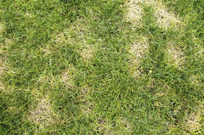 How to Get Rid of Grubs - Lawn Damage