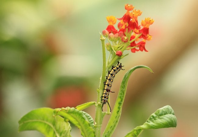 How to Get Rid of Caterpillars in the Garden