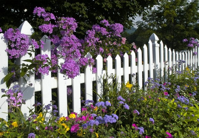 Fence Types - Treated Wood Pickets