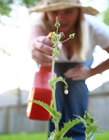 How to Make Weed Killer - DIY Spray