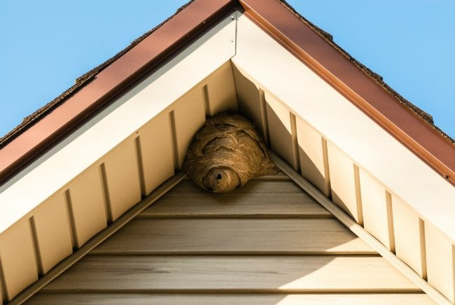 Wasps in House - Wasps' Nest Under Roof Eaves