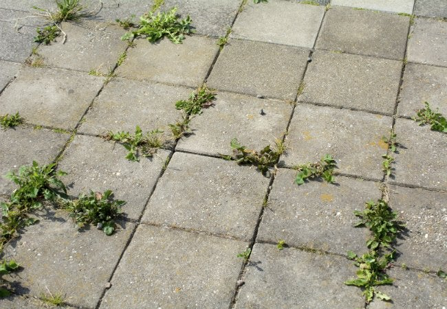 How to Make Weed Killer - to Clean Up Between Paver Cracks