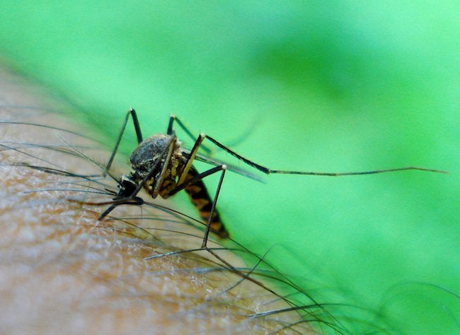 how-to-get-rid-of-mosquitos