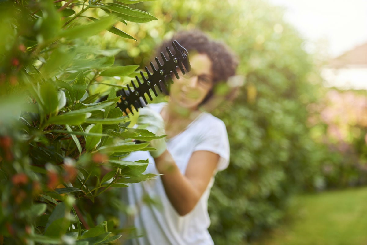 The Best Hedge Trimmer, According to Users
