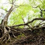 How To Kill Tree Roots Bob Vila