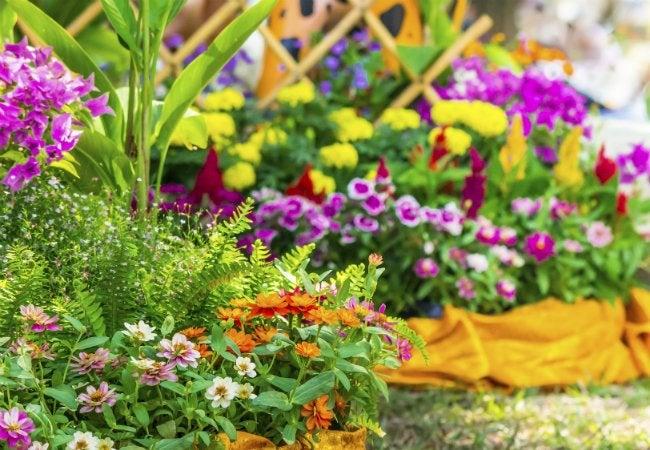 Soil Types - Loamy Soil is Good for Flowering Perennials
