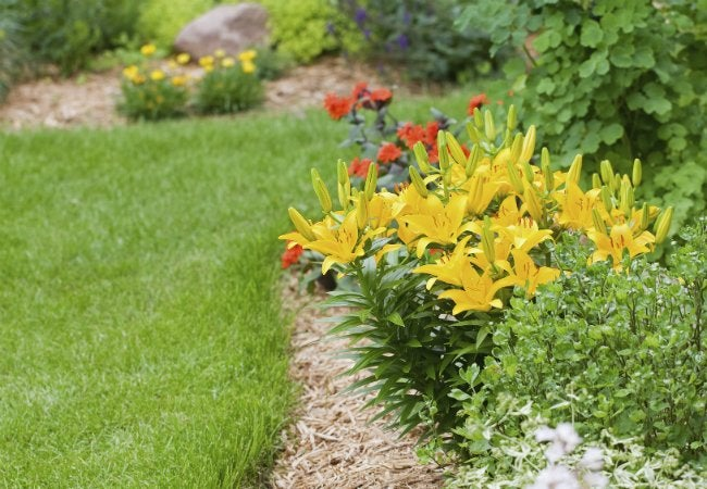 Soil Types - Chalky Soil is Good for Lilies