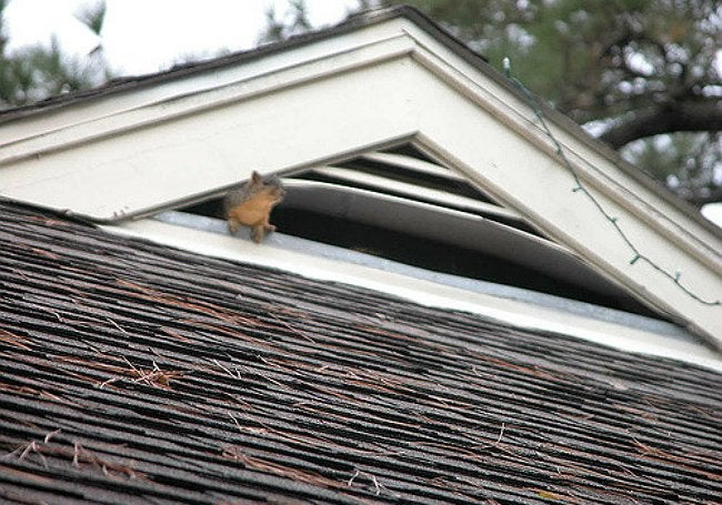 squirrels-in-attic-1
