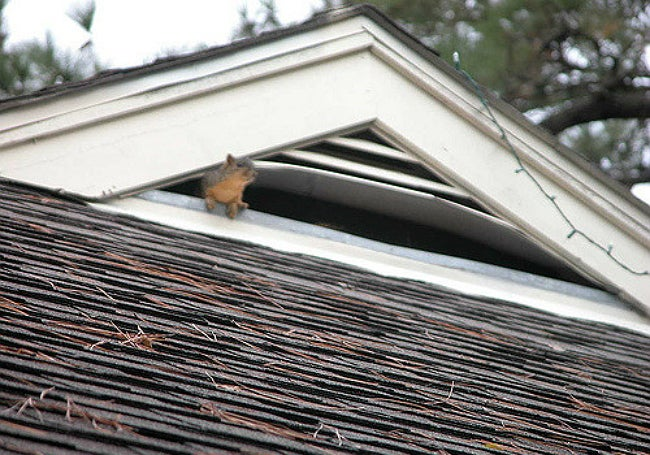 Squirrels in the Attic