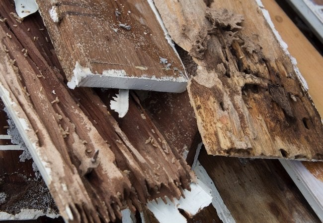 Wood-Destroying Insects - Termite Damage