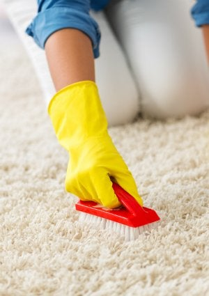 How to Get Mold Out of Carpet with a Stiff Brush