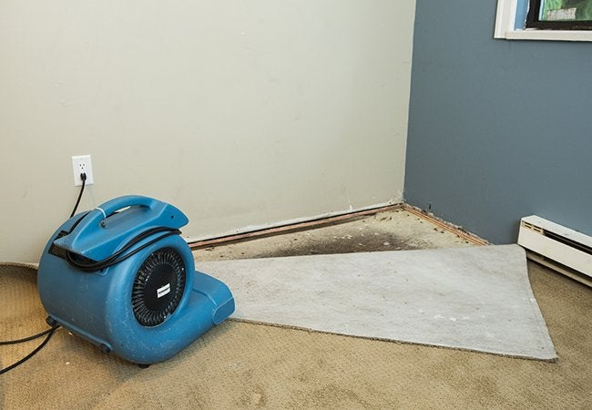 How to Get Mold Out Of Carpet With Dehumidifier