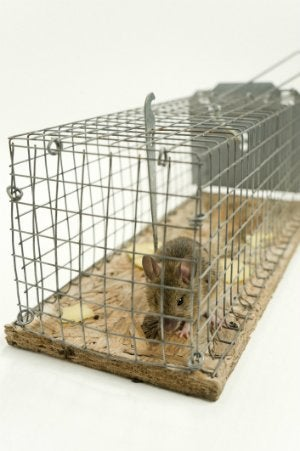 How to Catch a Mouse in a No-Kill Trap