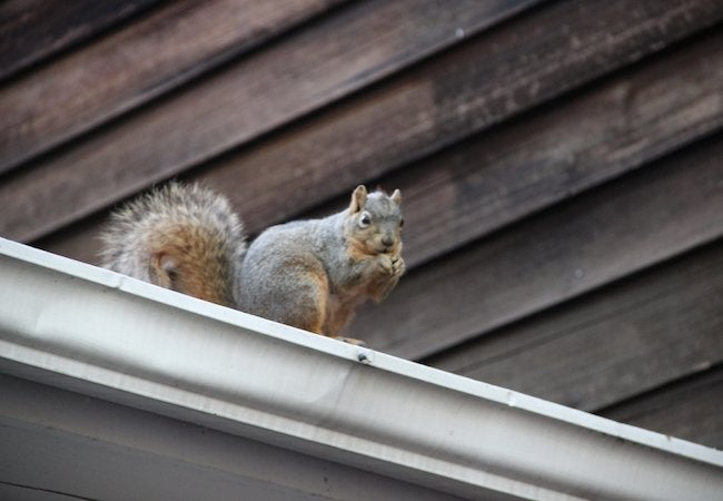 Getting Rid Of Squirrels Bob Vila Radio Bob Vila