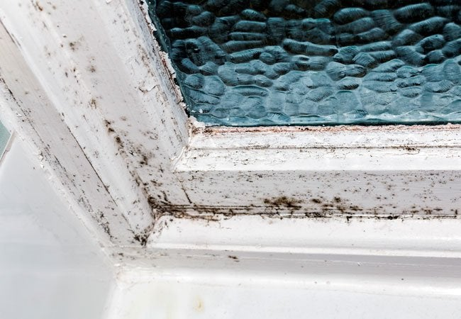 How to Remove Black Mold