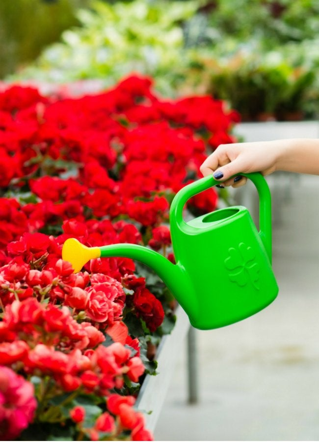 Best Begonia Care Tips