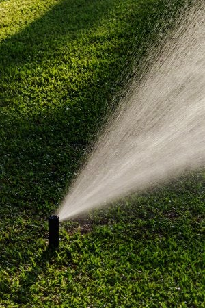 The Best Time to Water Grass, Solved! - Bob Vila