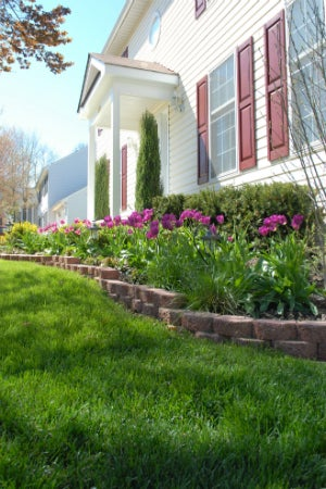 Choosing the Best Lawn Fertilizer