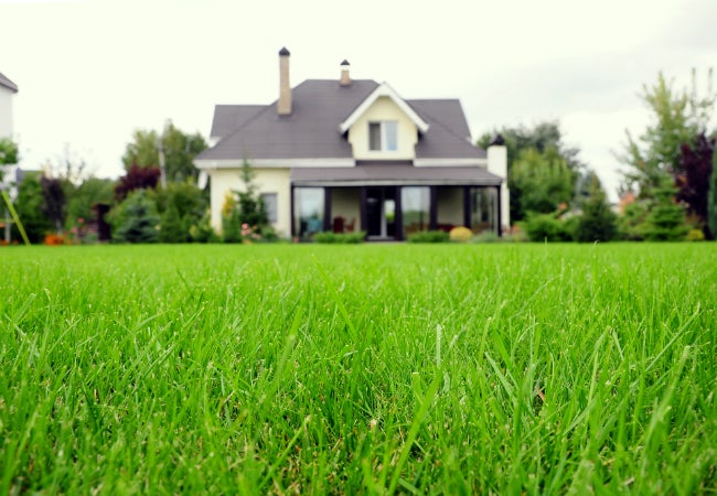https://www.bobvila.com/articles/types-of-grass/?bv=mr#.WQyinOUrLIU