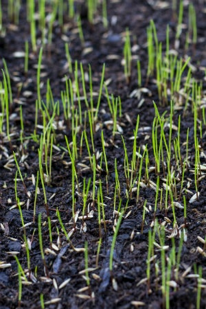 When to Plant Grass Seed for a Lush Lawn
