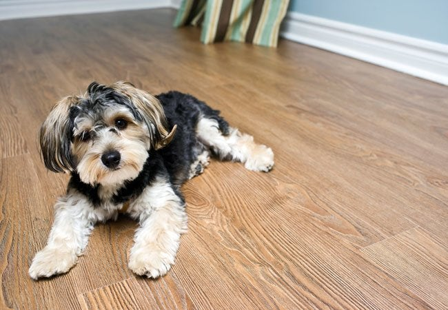 Best flooring for dogs solved bob vila for Hardwood floors good for dogs