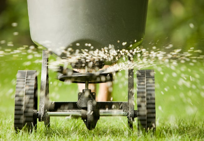 Best Time to Fertilize Grass