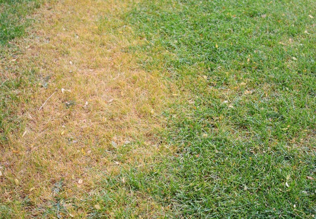 How to get brown grass green quickly