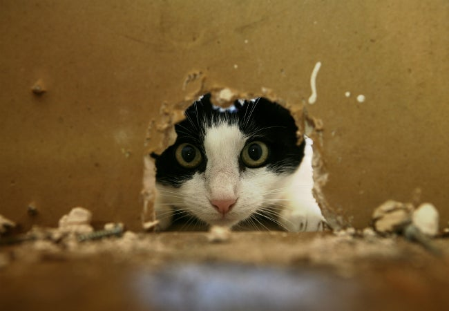 What to Do When You Hear Mice in the Walls