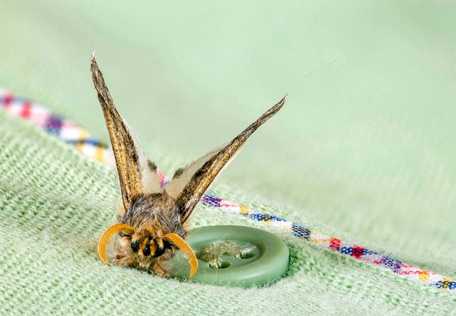 How to Get Rid of Clothes Moths