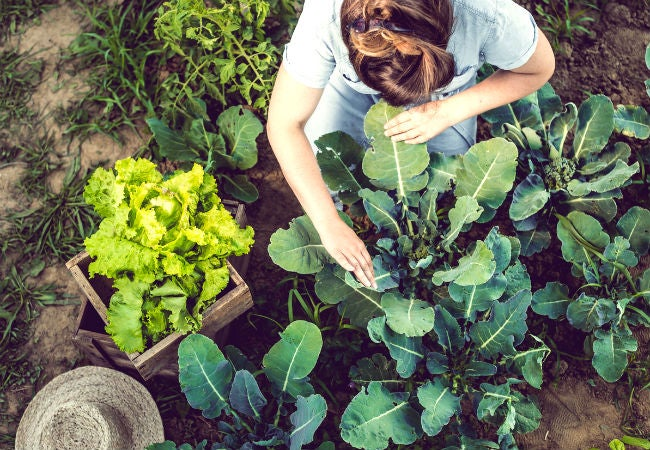 Loamy Soil 101 How To Make And Garden With It Bob Vila