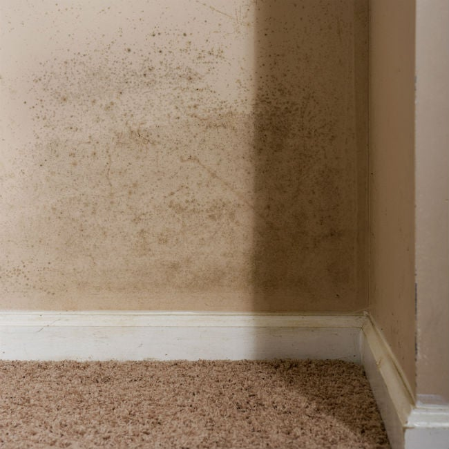 What to Do When You Find Mold on the Walls