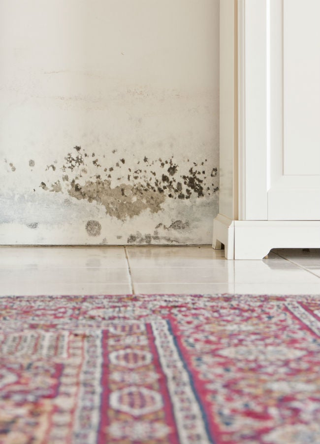 Mold on the walls how to kill it and clean up the stains - Cleaning mold off bathroom walls ...