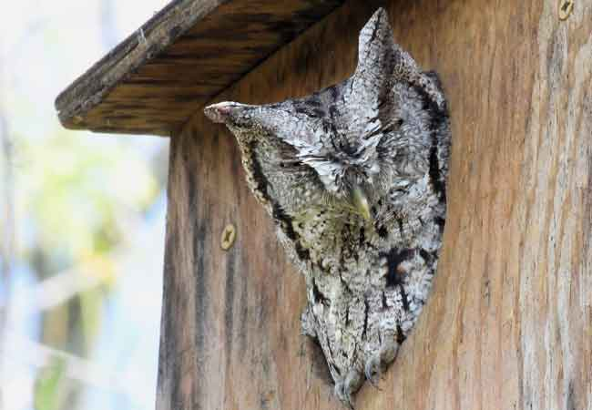 How To Attract Owls To Your Yard And Solve Your Pest
