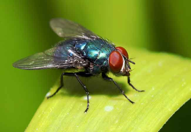 How To Get Rid Of Flies Outside Bob Vila