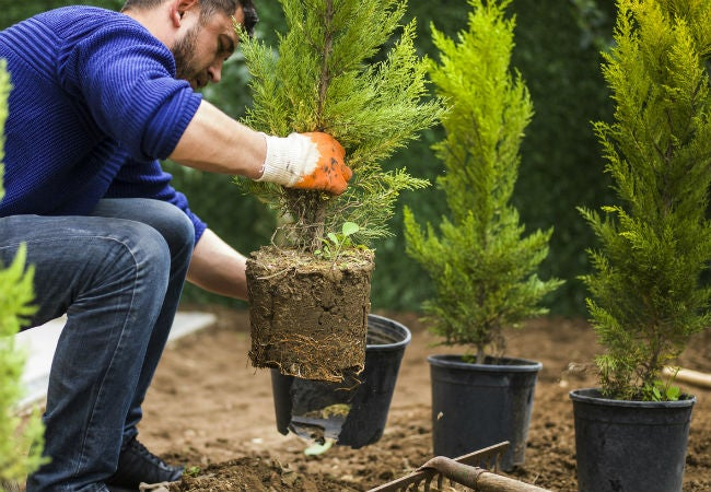 Best Time To Plant A Tree Spring Vs Fall Solved Bob Vila