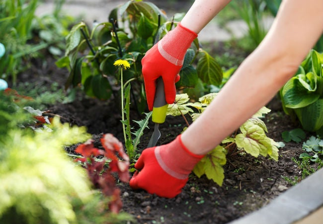 8 Top Tips for Pulling Weeds