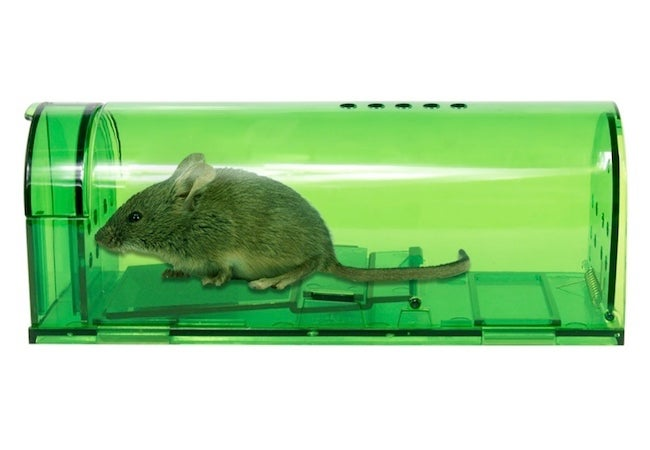 Best Mouse Trap - Catch and Release Mouse Trap