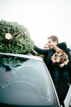 How Long Does a Christmas Tree Last? Solved!