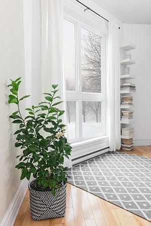 DIY Humidifier Tricks to Improve Air Quality at Home - Bob ...