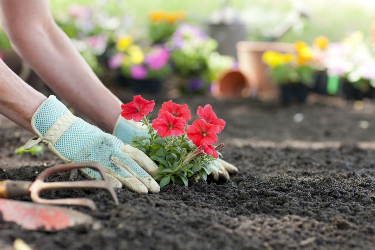 The Best Gardening Gloves, According to Happy Gardeners